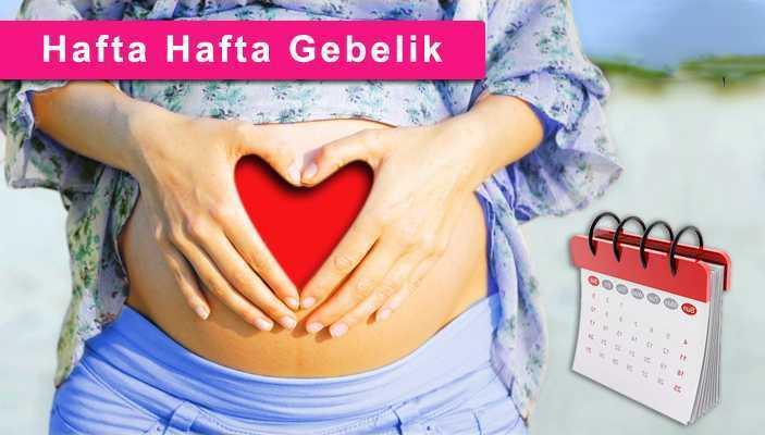 nazende-hafta-hafta-gebelik-copy Hafta Hafta Gebelik Takvimi